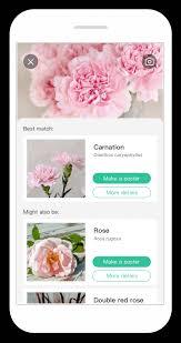 Flower Species Chart Picturethis Plant Identifier