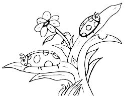 Lady Bug Coloring Sheet Free Printable Ladybug Coloring Pages For Kids