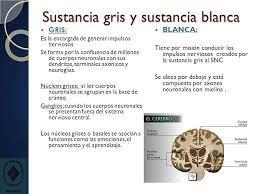 Resultado de imagen para el cerebro con sus sustancias blancas grises y  nucleos basales | Sustancia blanca, Neuroanatomia, Espinales