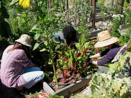 community gardening. Community Gardening