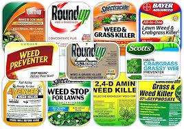 garden weed best weed for lawns garden natural vegetable garden weed