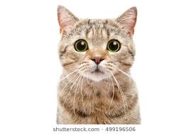 Cat Stock Quote Adorable Cat Images Stock Photos Vectors Shutterstock