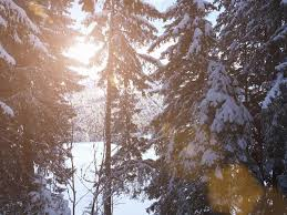 reading frost s stopping by woods on a snowy evening  sunburst through snow covered trees