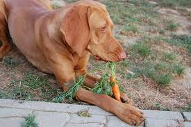 What Vegetables Can Dogs Eat Whole Dog Journal