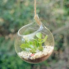 hanging glass orb money plant terrarium