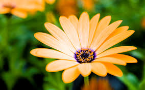 latest wallpapers of flowers.  Wallpapers 2178 Download 3624 Views Nice Yellow Flower HD Photo Background In Latest Wallpapers Of Flowers