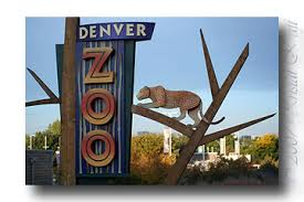Denver Zoo | Things To Do In Denver