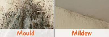 bathroom mold and mildew cleaning mold