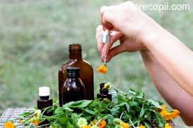 Cimbrişor (Thymus serpyllum) - beneficii și proprietăți