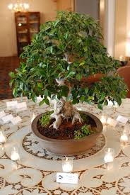 best 25 buddhist wedding ideas on pinterest floating lights Zen Wedding Gifts bonsai wedding family tree for guest sign in table Gifts for the Zen Office