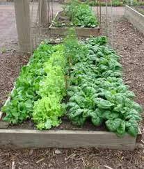florida vegetable gardening. Merveilleux Raised Vegetable Garden Florida Gardening A