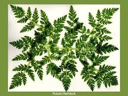 hammered botanical prints 1