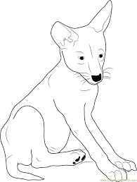 Small Picture Coyote Coloring Pages Printable Coloring Pages of Coyotes