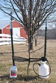 Pruning Fruit Trees Part 2 Apples And Pears  Gardening After FiveDormant Fruit Trees