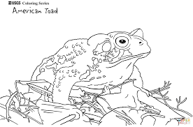American Toad coloring page | Free Printable Coloring Pages