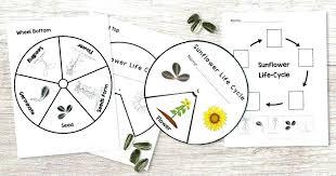 Lesson Plan In Science By Grade 2 Science Worksheets Plants – geermu ...