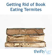 Drywall Termites   InterNACHI Inspection Forum
