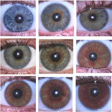 Prototypic Dominant Eye Color Chart 2019