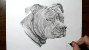 pitbull dog face drawing. Unique Drawing Inside Pitbull Dog Face Drawing O