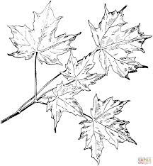 Small Picture Black maple leaf coloring page Free Printable Coloring Pages