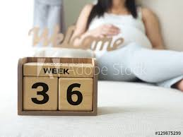 Calendar With Weeks 36 Of Pregnant With Pregnancy Woman