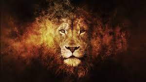 Lion Wallpaper Desktop (63+ best Lion ...