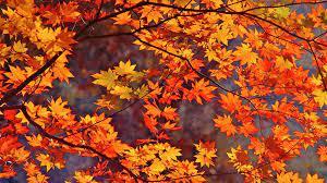 Fall wallpaper, Autumn leaves wallpaper