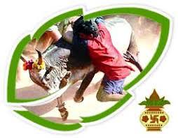 tamil pongal tamil pongal celebrations tamil pongal festival tamil pongal