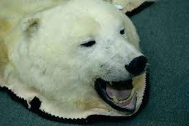 bear head rug fake bear skin rug bear head rug polar bear rug image 2 mounted bear head rug bear skin