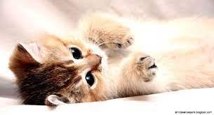 100 Cute And Sweet Cat Wallpaper ...