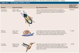 Animal Phylum Characteristics Chart Trends In Animal Evolution