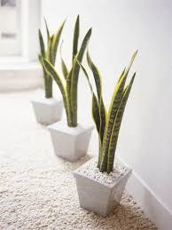 verity welsteaddorling kindersleygetty images best low light office plants