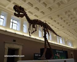 Image result for buffalo museum of science