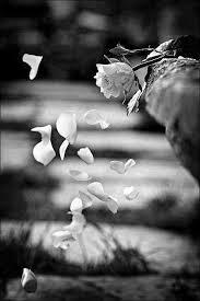Znalezione obrazy dla zapytania rose petals black and white