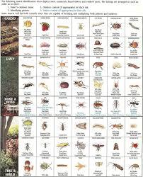 Insect Identification Chart Gardening Pinterest