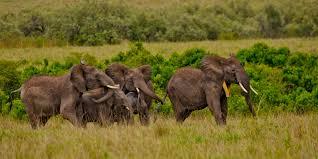 Wildlife Movement Chart Tracking Elephant Migrations Magazine Articles Wwf