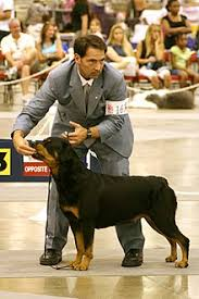 Rottweiler Size And Weight Chart Rottweiler Wikipedia