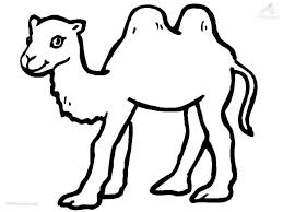 Camel Coloring Page Camel Coloring Page Free Coloring Pages For