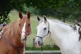 News blog zur website lydia albersmann de dezember 2011 pferdespringen ausmalbild malvorlage comics pferde und fohlen zeichnen. Reiterferien Fur Kinder Kribbelbunt