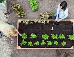 Raised Bed Kitchen Garden Design