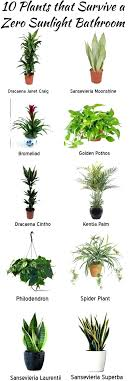 low light indoor plants resurfacing has compiled some zero light plants that can add fantastic decor low light indoor plants