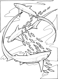 Small Picture Shark Coloring Pages Coloring Page