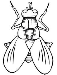 Small Picture House Fly coloring pages Download Free House Fly coloring pages