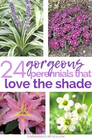 24 spectacular plants that will love it shadegarden shadeperennials 24 spectacular shade garden perennials