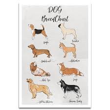 Dog Breed Chart Visionary Prints Dog Breed Chart Print Animals Wall Art Brown Beige Dog Art Modern Contemporary Poster Print 13x19 Inch