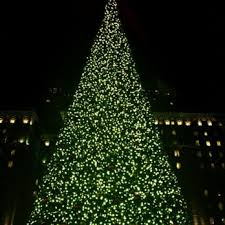 Holiday Trees Will Grow In SF Streets  RENTCafe Rental BlogChristmas Tree In San Francisco