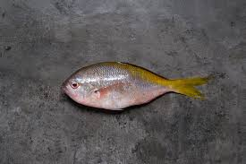 yellow tailtraditionally used to make fish however surimi s have replaced its importance in the fish ball business