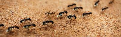How To Get Rid Of Ants Updated For 2019 Pestsorg