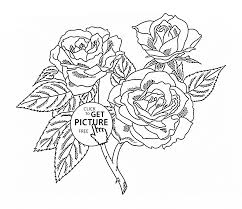 Small Picture Realistic Roses coloring page for kids flower coloring pages