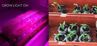 Best Led Grow Light For Peppers 2015 Growing Peppers From Seed For Beginners Cayenne Diane